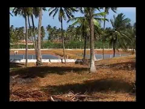 Costa Brasileira – Programa 42 – Alagoas, litoral Sul
