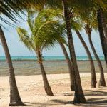 Praia, coqueiros e corais: cenario típico  de Alagoas.