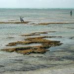 Ninguém respeita os corais de Alagoas. Até bikes são colocadas em cima...
