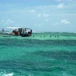 São cerca de 400 a 500 turistas por dia, pisoteando os corais, contribuindo para a morte do ecossistema marinho. O inoperante Ibama nada faz. Maragogi fica na APA dos Corais.
