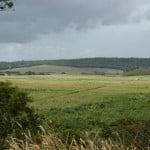 A Usina de Coruripe mantém uma reserva de 8 mil hectares de Mata Atlântica.