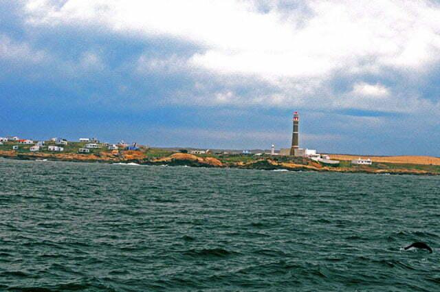 Cabo Polonio- no canto inferior direito, um lobo marinho.