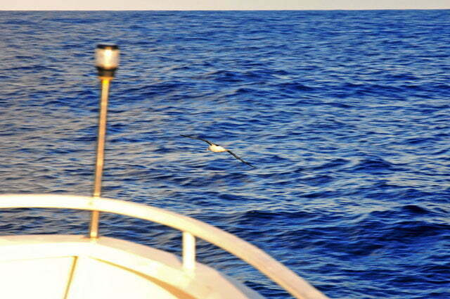 Guiando o Mar Sem Fim para o Horn