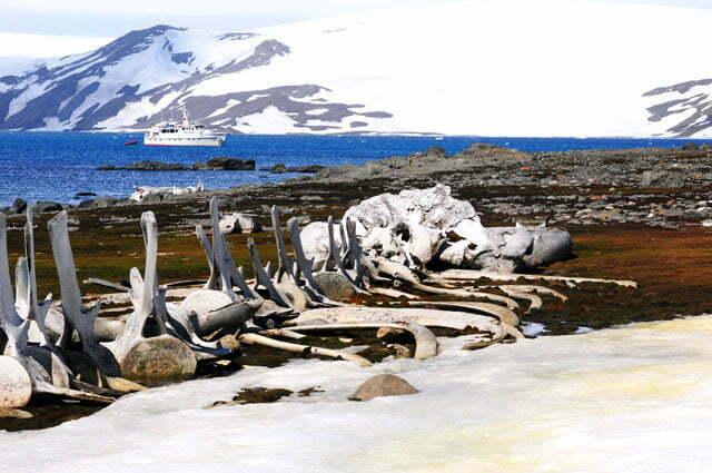 imagem de Esqueleto de baleias montado pela equipe de Cousteau, na antártica