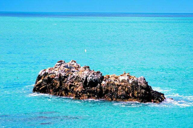 Colinia de leoes marinhos em Cabo Blanco
