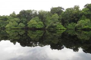 Amazônia: paisagem homogênea e biodiversidade, imagem de paisagem da amazônia