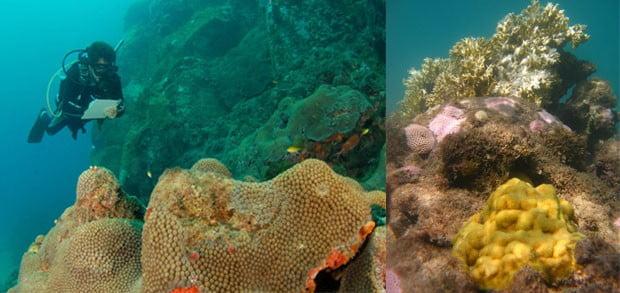 Ecossistema marinho, imagem de corais