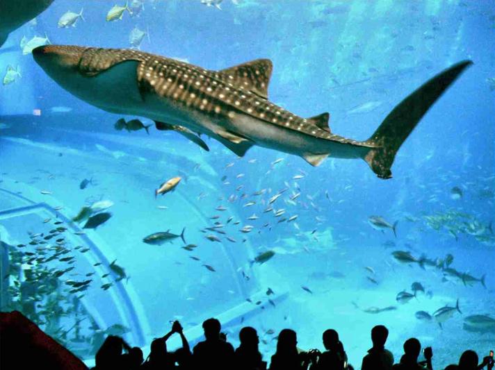 """""""Cid Gomes faz usina termelétrica no Ceará só para aquário"""", imagem de Tubarões- baleia em aquário"""