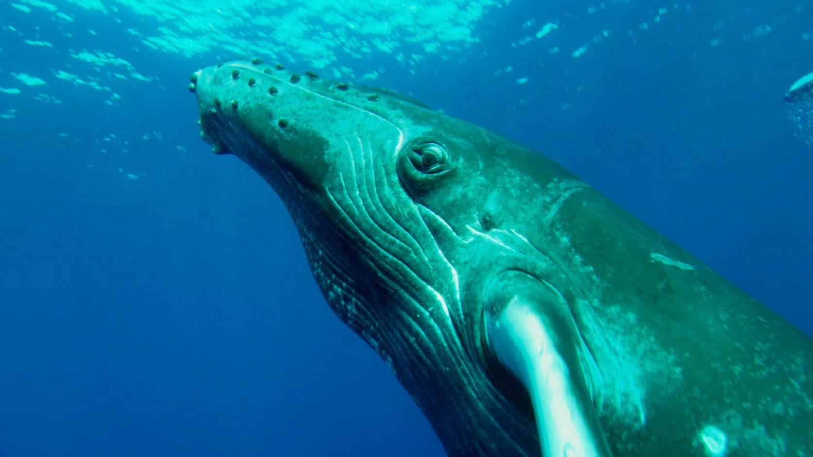 Scars of Freedon, de Céline Cousteau, imagem de baleia