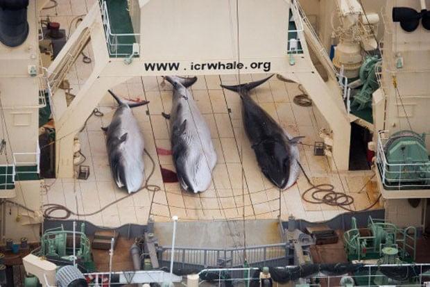 baleia1