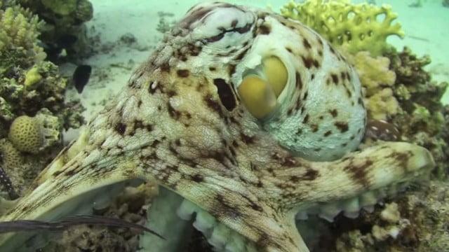 Criaturas marinhas fantásticas.