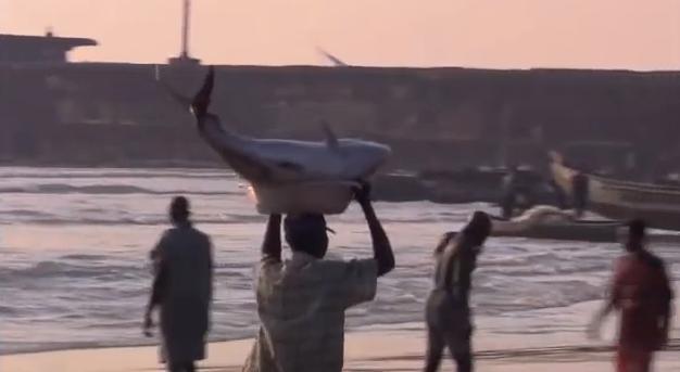Cenas de pescadores levando peixes ao mercado