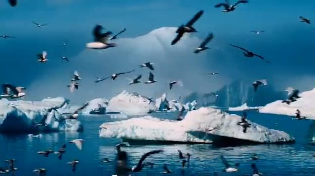 Acidificação dos Oceanos, Paisagem da Antártica com pássaros e icebers