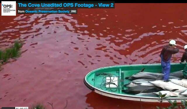 Imagem do documentário The Cove sobre matança de golfinhos no japão.