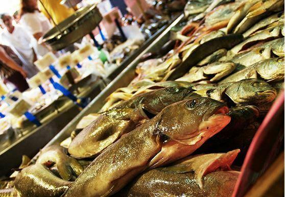 peixes ameaçados de extinção, imagem de peixes em barraca de feira