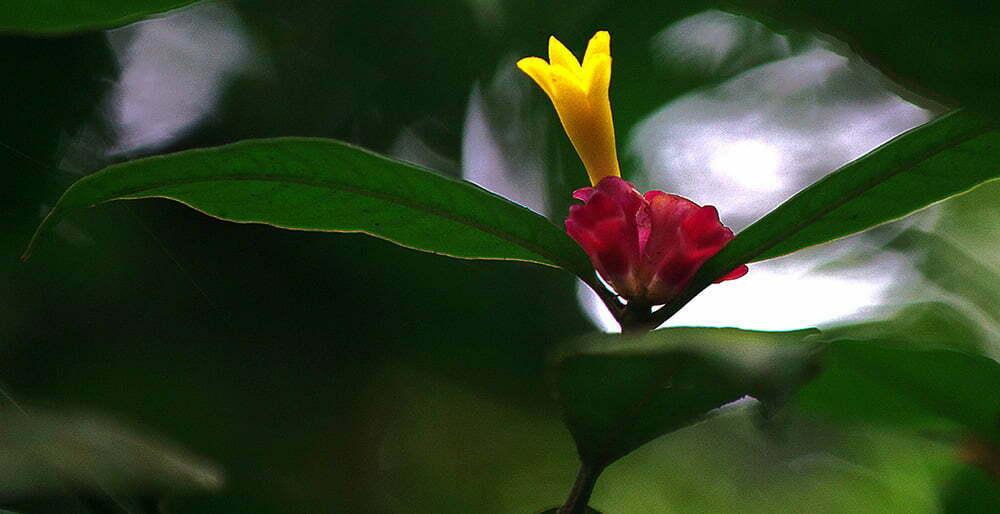 flor-amarela-aa