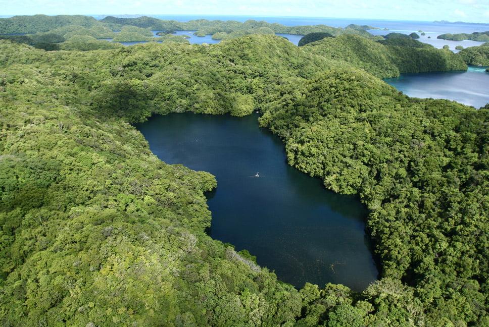 imagem de Palau, onde é possível o mergulho com águas vivas