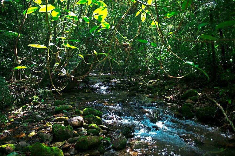 RPPN Salto Morato, Reserva Particular do Patrimônio Natural Salto Morato, imagem de riacho na mata atlântica