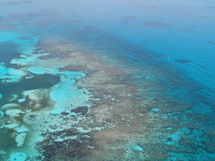 Fundo para o Meio Ambiente Mundial,imagem arrecife mesoamericano