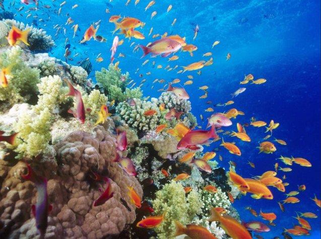 Fundo para o Meio Ambiente Mundial, imagem de peixes em recifes