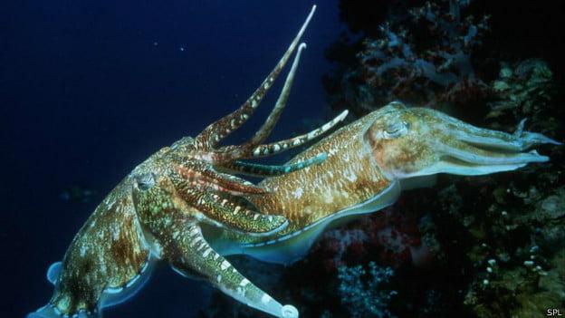 Moluscos marinhos inspiram novo material que muda de cor de acordo com o ambiente