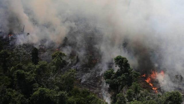 Dilma não criou nenhuma nova Unidade de Conservação na Amazônia