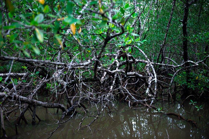 raizes-sem-ostras apa cananeia iguape peruibe