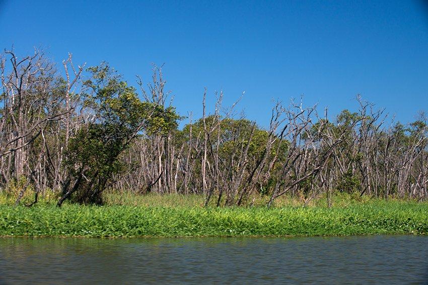 o-mangue-detonado iguape apa cananeia iguape peruibe