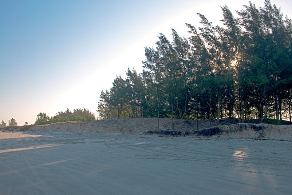 pinus-na-praia-ilha compriada apa cananeia iguape peruibe