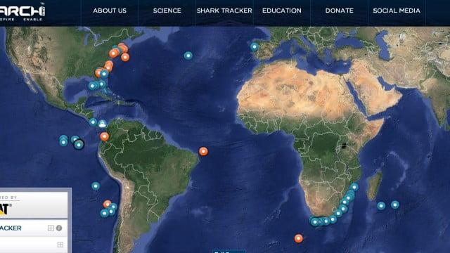 Tubarões serão monitorados por satélite