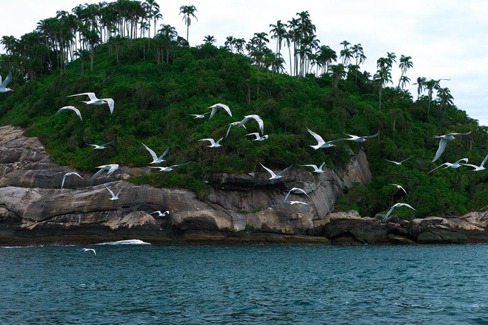 ilhas da Queimada Pequena e Queimada Grande, imagem dos-trinta-reias-q-pequena--arie ilhas da Queimada Pequena e Queimada Grande