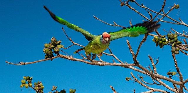APA Cananéia – Iguape – Peruíbe.