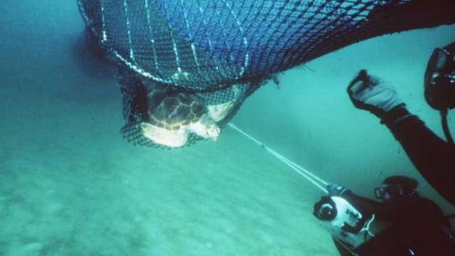 Dispositivo TED pode salvar vida de tartaruga pega por rede de pesca
