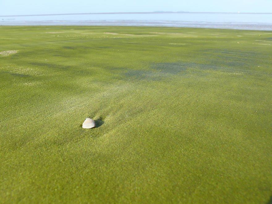 As praias mais diferentes do mundo, imagem de praia na guiana francesa