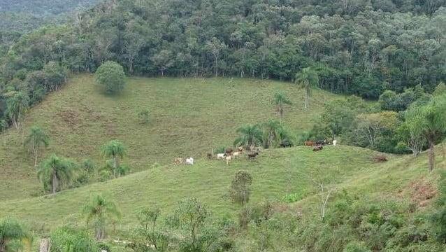 Venda de vegetação nativa gera mercado bilionário