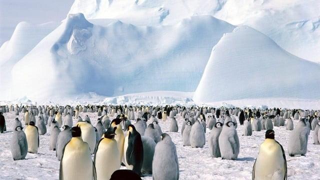 França pede acordo para zonas marinhas protegidas na Antártica