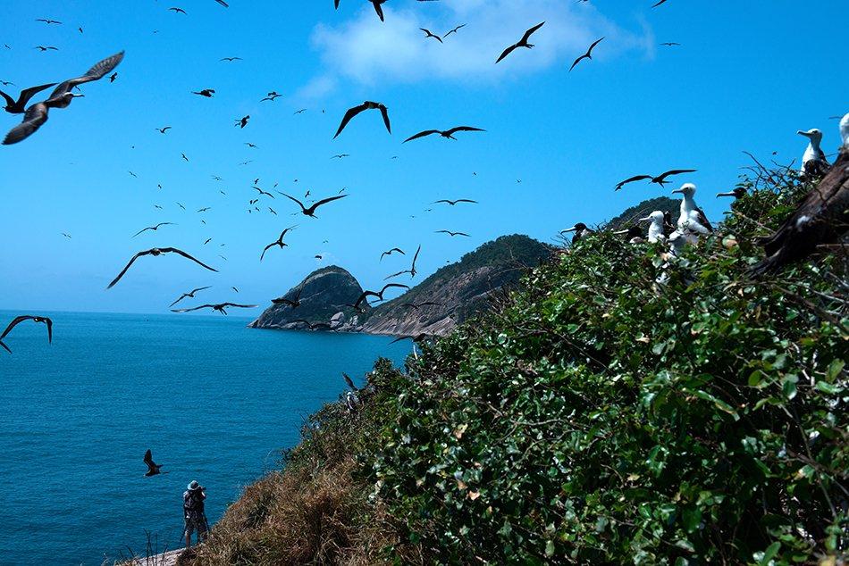 Arquipélago de Alcatrazes, litoral Norte de São Paulo, imagem de alcatrazes-e-revoada-de aves marinhas