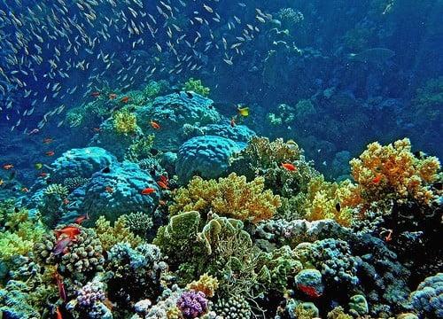 Plano para salvar barreira de corais da Austrália é criticado por cientistas
