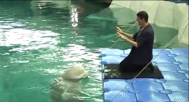 imagem cantor e beluga