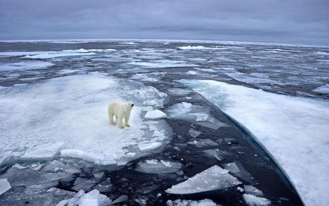 imagem ártico