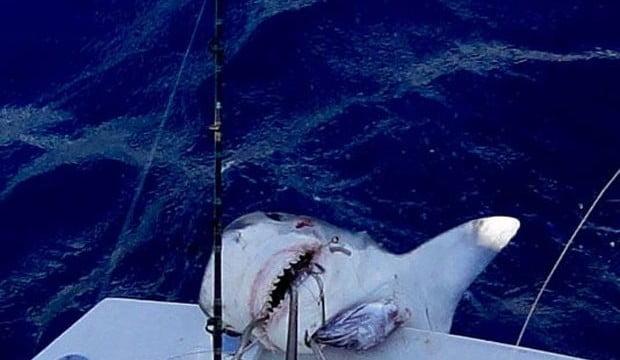 Menino de 12 anos pesca tubarão de 2,5m