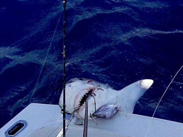 imagem menino de 12 anos pesca tubarão