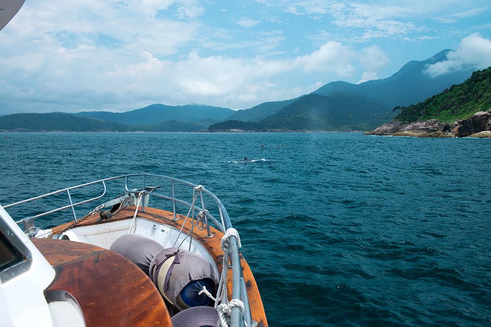 -baleia-na-proa do mar sem fim