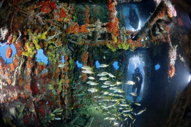 Recifes artificiais, metrô no fundo do oceano depois de 10 anos