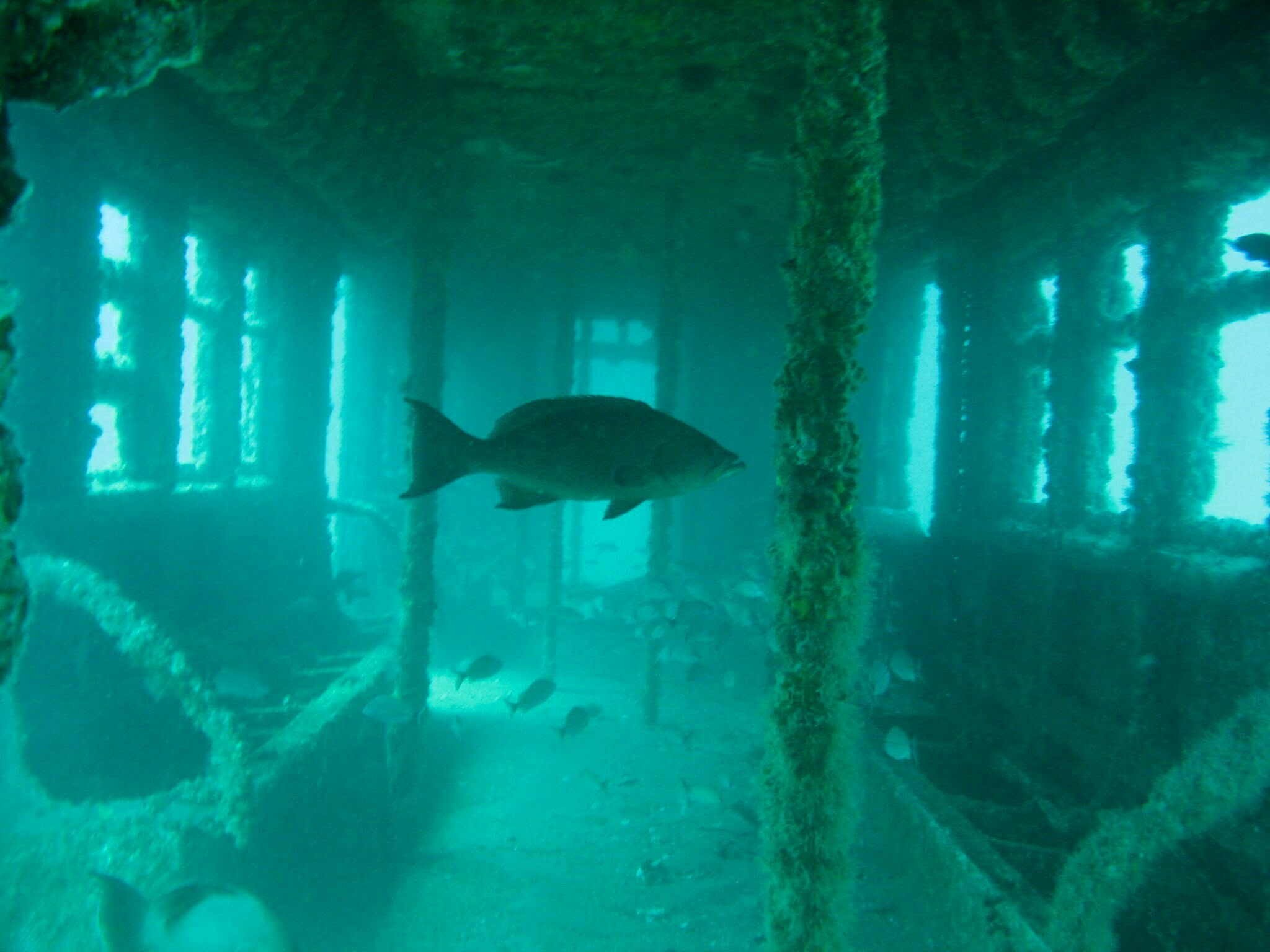 Recifes artificiais, imagem de metrô no fundo do oceano depois de 5 anos