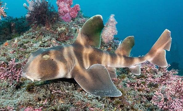 Conheça espécies curiosas de tubarão