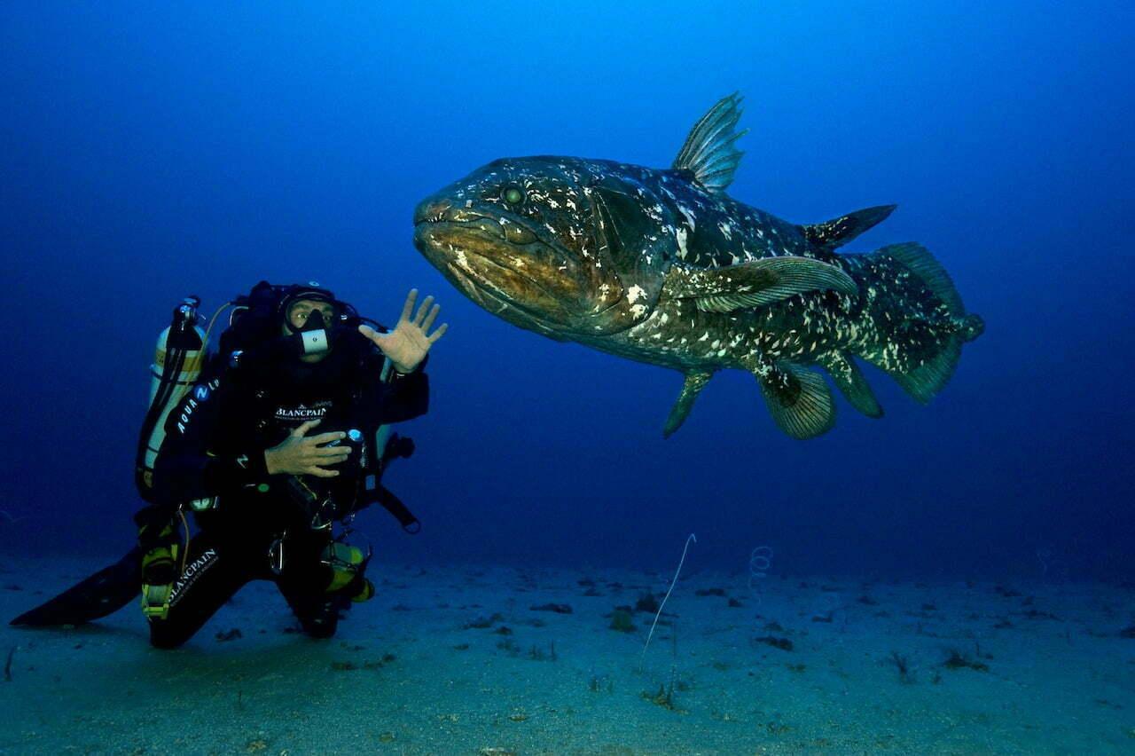 celacanto, espécie de 400 milhões de anos, imagem de celacanto no mar
