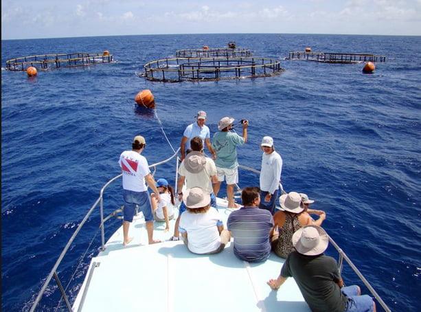 Criação de peixes em cativeiro, imagem de pesquisa-no mar com bijupirá