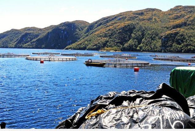 Criação de peixes em cativeiro, imagem de tanques-de-salmao-