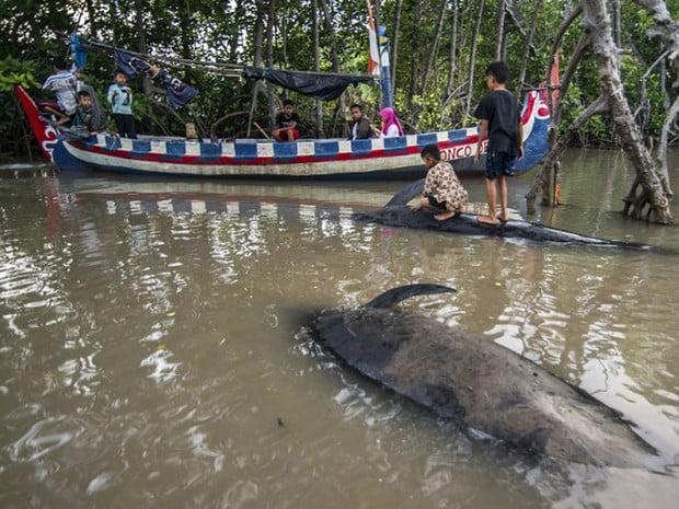 baleias encalham